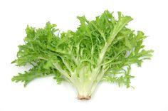 Batavia, Chinakohl, Endivie - in unserer kleinen Salatkunde können sie alles Wissenswerte zu den beliebstesten Salatsorten nachlesen...