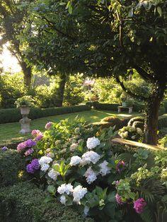 Dream Garden, Beautiful Gardens, Garden Ideas, Dreams, Plants, Hydrangeas, Lawn And Garden, Landscaping Ideas, Plant