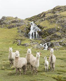 west elm + Peru: A Handcrafted Story