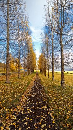 Path, Trail, Autumn, Trees