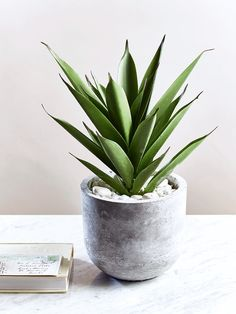 Potted in a stylish and smooth concrete pot, our impressive Aloe Vera looks so realistic you'll find it hard to believe it's not. Each tabletop pot is filled with a faux Aloe plant and scattered pebbles, adding a a fresh botanical feel to your home all year around.