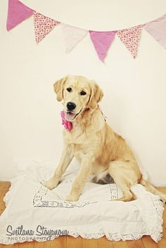 Golden Retriever Puppy at 6 months by ☆Lucy in the Sky with Diamonds☆, via Flickr. Pet Photography.   Dog   Dogs