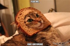 Funny picture: Not the bread