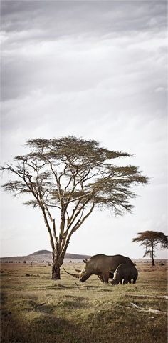 "Africa | ""Pride of Africa; Union"" | ©Klaus Tiedge"