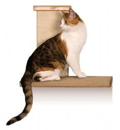 Smart Cat Sky Climber  just for the cats that love to perch up high - Online Pet Shops, Pet Shops, Morayfield, QLD, 4506 - TrueLocal