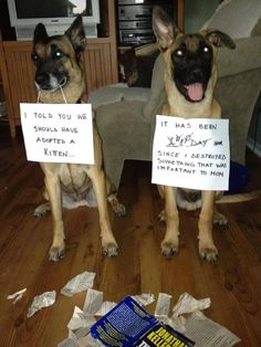 dog obedience training tips Funny Animal Memes, Dog Memes, Cute Funny Animals, Funny Animal Pictures, Funny Cute, Funny Dogs, Hilarious, Animal Funnies, Love Dogs