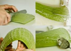 Aloe Vera is a succulent plant animal types that develops wild in tropical atmospheres, yet today it is developed worldwide because of its rural and restorative employments. The Aloe Vera plant likewise is developed beautiful plant. Aloe Vera is anything but difficult to inside as a pruned plant, and you can grow one in your …