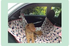 diy dog hammock! Using a clearance picnic blanket and help from this tut, Quick and Simple!!