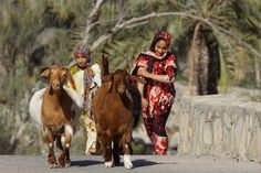 Oman | Girls and Goats in Balad Seed. credit: CharlesFred. view on Fb https://www.facebook.com/SinbadsOmanPocketGuide #oman #traveltooman #sinbadpocketguide