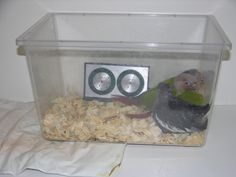 Baby Parrot Brooder 1
