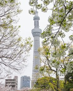 Tokyo Sky Tree is the tallest tower in Japan. It was opened in 2012, and became a new sightseeing spot in Tokyo. It is located near Asakusa. http://www.travel-around-japan.com/k31-57-tokyo-sky-tree.html