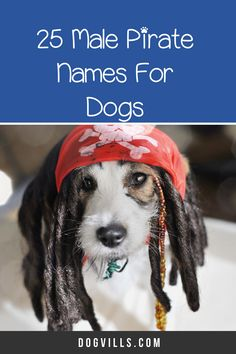 Check out our list of famous badasss dog names for some of our favorite badass dog names inspired by the baddest, coolest and most intriguing fictional characters we've seen on our screens or read about in books. Cool Female Dog Names, Dog Names Male, Best Dog Names, Cool Names, Best Dogs, Female German Shepherd, German Shepherd Names, Disney Names, Famous Dogs