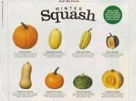 Winter Squash Guide   Co+op, welcome to the table Carbs In Squash, Squash Pie, Pumpkin Squash, Acorn Squash, Pumpkin Soup, Winter Squash Varieties, Buttercup Squash, Sweet Dumplings, Bon Appetit