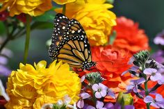 Love the brush effect. Butterfly royalty by Lisa Drummond, via Flickr