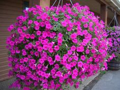 Cestas colgantes con flores