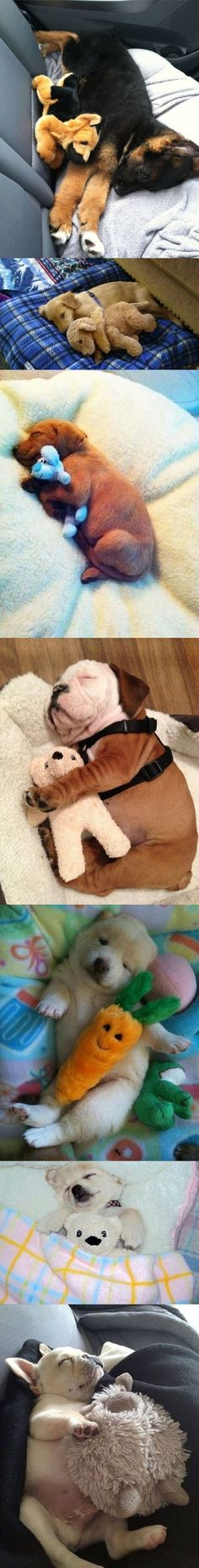 Puppies sleeping with stuffed animals.