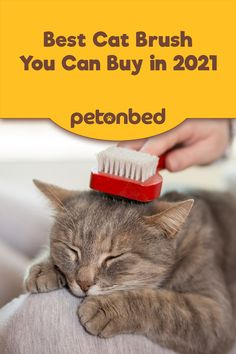 Deshedding a cat's fur can be quite difficult when you don't have the right tools. This piece will recommend a list of the best brush you can buy for your cat. #catgrooming #catproducts