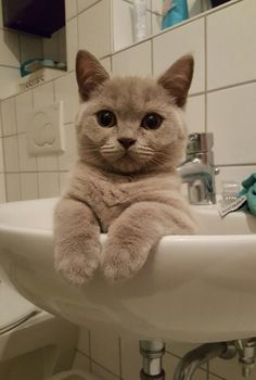 Found my kitten like this in the middle of the night (x-post r/CatsInSinks) https://ift.tt/2ENDDpV cute puppies cats animals