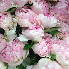 """""""My colors are blush and bashful."""" Yep, Shelby had it right. #peony #mysouthernliving"""