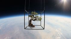 What A Bonsai Tree Looks Like Suspended In Space / a japanese artist sent two botanical arrangements into space this week. images are breathtaking