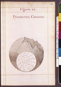 Figura XL - Projectio. Ceratio - Sapientia veterum philosophorum, sive doctrina eorumdem de summa et universali medicina 40 hierogliphis explicata