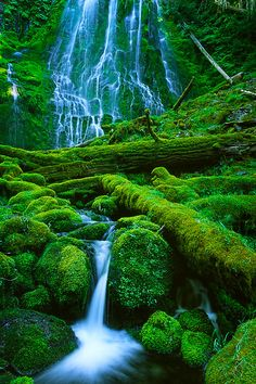 Proxy Falls in Oregon, all its green and mossy splendor
