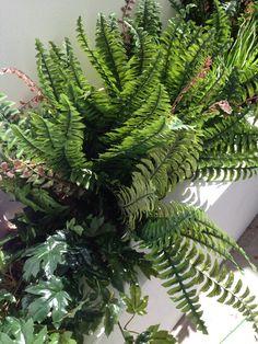 ferns in a basement light well artificial plants in a basement