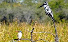 Birding safaris | RAW Botswana Okavango Delta, Safari, To Go, Africa, Boat, Camping, Animals, Campsite, Dinghy
