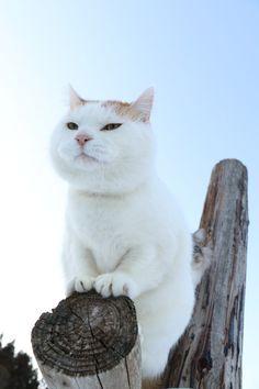I Love Cats, Crazy Cats, Cute Cats, Funny Cats, Kittens Cutest, Cats And Kittens, Black Cat Appreciation Day, Adventure Cat, Cat Attack