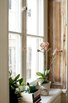 Stripped wood window frames and orchid.