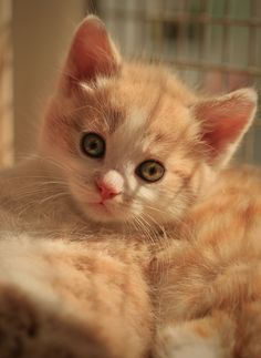 Cute little ginger puff, what a sweet face.