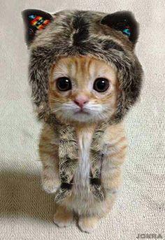 So cute & cuddly