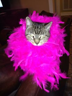 Grandkid's cat.  What a DIVA. What taste!! What sophistication.