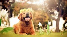 Happiness - Dogs Wallpaper ID 1824412 - Desktop Nexus Animals