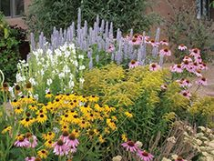 plants for a cottage garden - Google Search