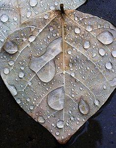 Leaf in Rain | by alan_sailer
