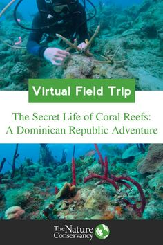 Virtual Field Trip: The Secret Life of Coral Reefs. Students take a virtual trip to the Dominican Republic for an underwater adventure . Teaching Science, Science Activities, Educational Activities, Life Science, Home Learning, Fun Learning, Virtual Travel, Virtual Field Trips, Kids Education