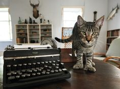 The polydactyl Hemingway cats of Key West