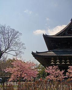 toji, kyoto, Japan, Asia, Nippon, travel