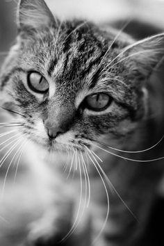 rokuthecat