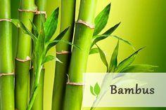 bambus - najbardziej odporna roślina świata