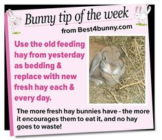 Bunny tip - Swap the old feeding hay to bedding Meat Rabbits, Raising Rabbits, Rabbit Cages, House Rabbit, Bunny Care Tips, Rabbit Diet, Bunny Names, Dwarf Bunnies, Indoor Rabbit