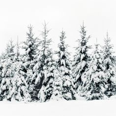 Snow Porn Art Print by Tordis Kayma | Society6