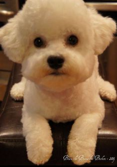 it's a doggy! Cute Puppies, Cute Dogs, Dogs And Puppies, Doggies, Beautiful Dogs, Animals Beautiful, Cute Animals, Dog Grooming, Dog Pictures