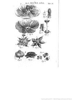 Illustratio systematis sexualis linnaeani..., Carl von Linné, John Miller, 1789