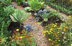 Συγκαλλιέργεια λαχανικών και λουλουδιών - GardenTalk.gr