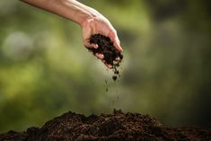 Taking good care of a property usually isn't just about home maintenance. Anyone who would like to enjoy gazing out on a pleasant landscape needs to put some effort into soil management. If you're unfamiliar with gardening fundamentals, the topsoil is a thin and precious layer of about six inches containing the nutrients, organic matter, …   Three Major Causes of Soil Erosion and How to Mitigate Their Effects on Property Read More » The post Three Major Causes of Soil Erosion and How to…