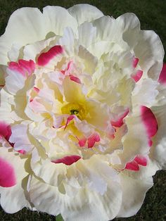 In the Language of Flowers, peonies were said to represent bashfulness or even shame. However, today, peony flowers are considered a more luscious symbol of romance, and are thought to be a good omen for happy, prosperous unions. As a gift, these flowers may be given for a variety of reasons – to wish someone a happy life with their new spouse or to celebrate a 12th wedding anniversary. They may represent a wish for the recipient to receive endless love or endless wealth and esteem