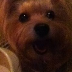 My Dog Emily <3