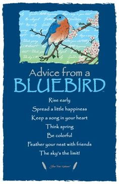 Find inspiration in nature with Advice From a Firefighter, Advice From a Park Ranger, and other inspirational bookmarks. Shop Your True Nature today. Animal Spirit Guides, Spirit Animal, Pretty Birds, Beautiful Birds, Beautiful Drawings, Bluebird House Plans, Blue Bird Art, Bluebird Tattoo, Colorful Feathers